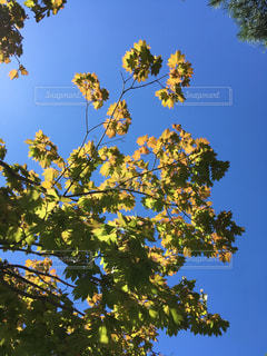 夏の終わりと秋の始まりの写真・画像素材[1508649]