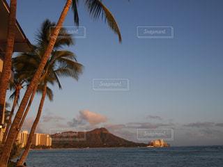 水の体の前でヤシの木とビーチ - No.1039412
