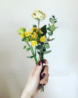 花束の写真・画像素材[1168214]