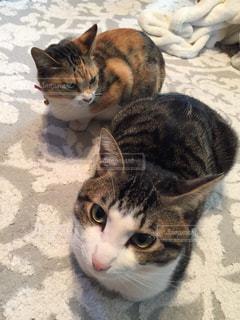 猫達の写真・画像素材[1041928]