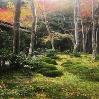 祇王寺の苔の写真・画像素材[1039552]