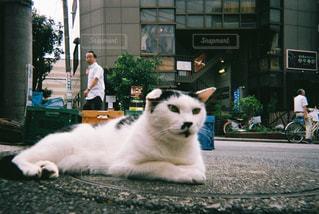 白い背景の上に横たわる猫の写真・画像素材[1039620]