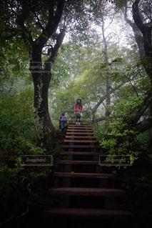 大山登山道の写真・画像素材[1064668]