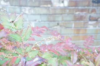 近くの花のアップの写真・画像素材[1076540]