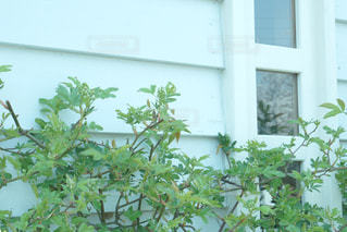 窓から成長している緑の植物の写真・画像素材[1099635]