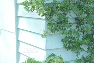 緑の植物の家の写真・画像素材[1099646]
