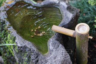 日本庭園の写真・画像素材[1562274]