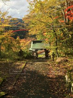 紅葉の中に見える赤い橋の写真・画像素材[980023]