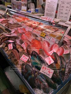 魚の写真・画像素材[1424281]