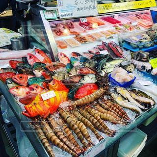 魚の写真・画像素材[1424282]