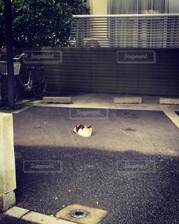 駐車場に駐車する猫の写真・画像素材[1040212]