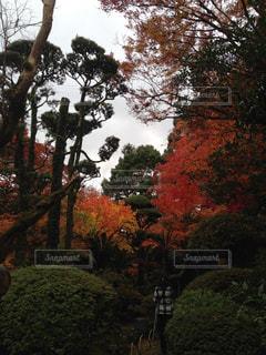公園の大きな木の写真・画像素材[1153237]