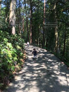 森の中を歩く幼児の写真・画像素材[1193735]