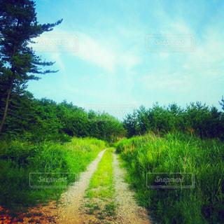 緑豊かな森の道の写真・画像素材[1040885]