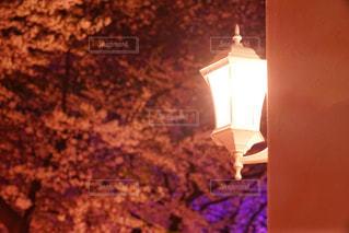 夜桜と街灯の写真・画像素材[1062903]