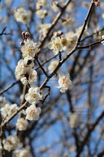春の訪れの写真・画像素材[1040399]