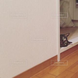 のぞき見る猫の写真・画像素材[1040577]