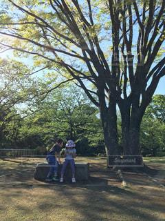 木の下で遊ぶこどもの写真・画像素材[1040629]