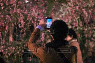 画面越しの梅の花の写真・画像素材[1040623]