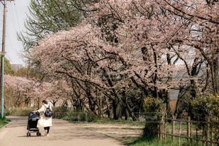 春のおさんぽの写真・画像素材[1041961]