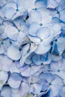 近くの花のアップの写真・画像素材[1266822]