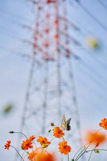 近くの花のアップの写真・画像素材[1267736]