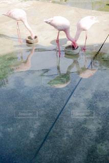 水の中の世界の写真・画像素材[1281852]