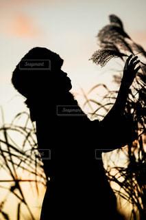 夕暮れ時とススキの写真・画像素材[1685803]