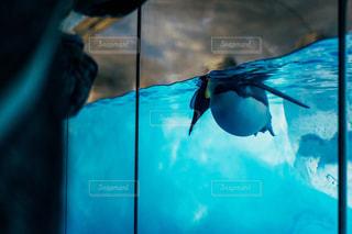 人間と触れ合うペンギンの写真・画像素材[1785199]