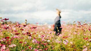 野原の花の写真・画像素材[2431394]