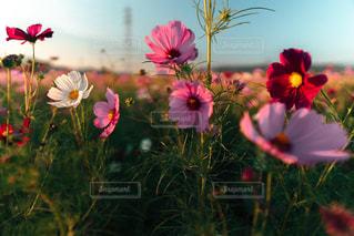 花の写真・画像素材[2620496]