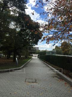 通りの側に木にパスの写真・画像素材[1040727]