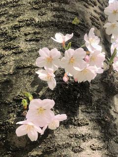 紫の花で満ちている白い花瓶の写真・画像素材[1087516]