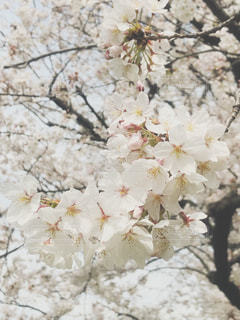 近くの花のアップの写真・画像素材[1087519]