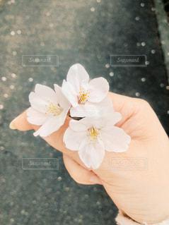 花を持っている手の写真・画像素材[1087526]