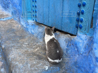 シャウエンの猫の写真・画像素材[1040930]