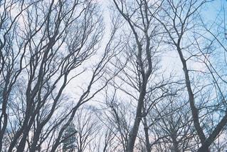水色の木の写真・画像素材[1877017]