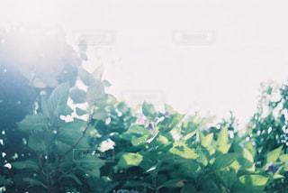 光の中の植物の写真・画像素材[1877031]