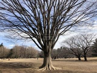 公園の大きな木の写真・画像素材[1041179]