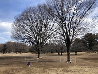 公園の大きな木と子どもの写真・画像素材[1041181]