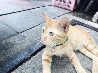 歩道の上に横たわる猫の写真・画像素材[1041170]