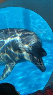 イルカの顔アップの写真・画像素材[1041466]