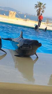イルカのあっかんべーの写真・画像素材[1041467]