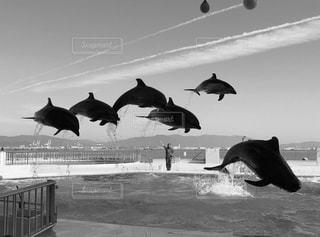 飛行機曇と共にの写真・画像素材[1041470]