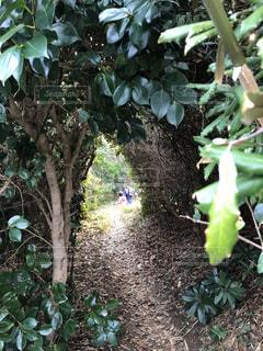 トトロの森の写真・画像素材[1041502]