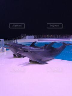 イルカの写真・画像素材[1041626]