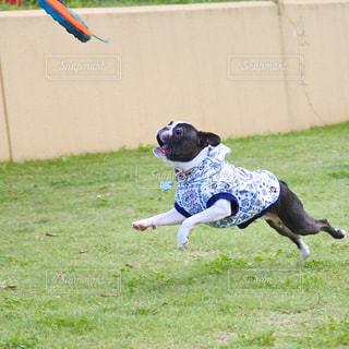 フリスビーと犬の写真・画像素材[1041587]
