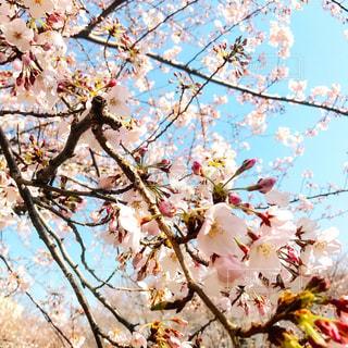 春の写真・画像素材[416980]