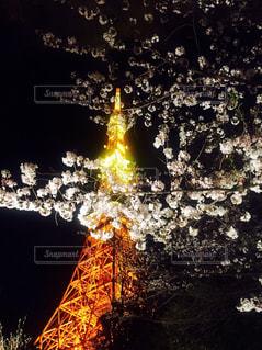 東京タワーと桜の写真・画像素材[1041826]