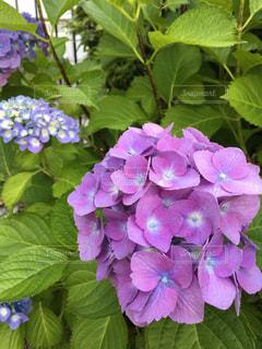 近くの花のアップの写真・画像素材[1207194]